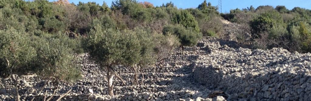 Economia del suolo. Foto T.Bommarco