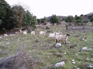 Paesaggio pastorale di Cherso. Foto O.Markovic